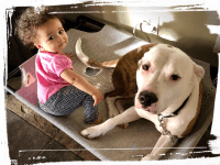 Pitbull laying down next to baby girl