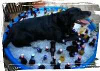 dog cooling of in playpool