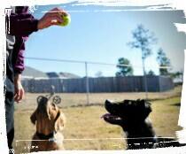 dog trainer teaching fetch