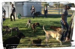 Dogs socializing and playing under proper supervision