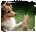 dog training high five