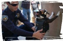 dog being frisked by police officer