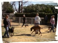 phoenix dog training group obedience class, dogs walking nicely, no lunging barking or pulling